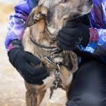 В добрые руки собака, Екатеринбург