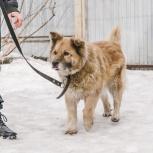 Собака по кличке Алла хочет снова найти дом, Екатеринбург