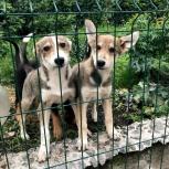 Брат И Сестра 4-5 Мес, щенки, Екатеринбург