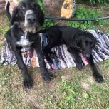 Найдены 2 собаки, Екатеринбург