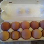 Яйца от деревенских кур, Екатеринбург