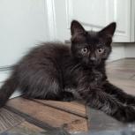 Котёнок 2.5 мес, мальчик, Екатеринбург