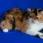 Экзотическая кошка, экстремальная черепашка, шоу клас, Екатеринбург
