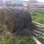Продам сено луговое, Екатеринбург