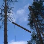 Спилить дерево альпинистами, обрезка веток, корчевка пней, Екатеринбург