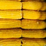 Кукуруза для бизнеса, Екатеринбург