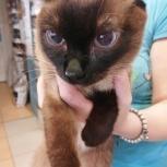 Котенок в добрые руки, Екатеринбург