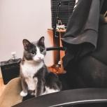 Найдена домашняя кошка, Екатеринбург
