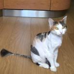 Пропала кошка в районе Парк Хауса, Екатеринбург