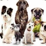 Гостиница для собак, Екатеринбург