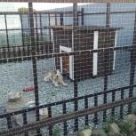 Вальер для собак, Екатеринбург