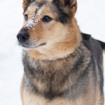 Собака по кличке Фомка в добрые руки, Екатеринбург