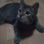 В районе ВИЗа на улице Кирова найден котенок в зеленом ошейнике, Екатеринбург