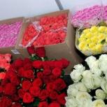 Розы из теплиц Арамашево, Екатеринбург