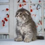 Вислоухий котик, Екатеринбург