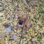 Ищем семью для щенка Ромы, Екатеринбург