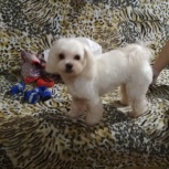 Помогите найти собаку, Екатеринбург