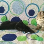 Котята приносящие любовь, Екатеринбург