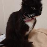 Найдена чёрная кошка, Екатеринбург