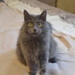 Петя-серый котик, Екатеринбург