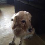 Найдена собака на ВиЗе, Екатеринбург