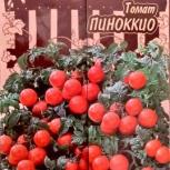 Рассада помидор Черри красного цвета, Пиноккио, Екатеринбург