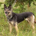 Чудо-собака для Чудо-хозяина, в дар, Екатеринбург