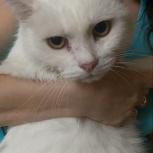 Найден белый кот, Екатеринбург