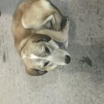 Найден ласковый щенок, Екатеринбург