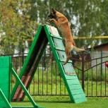 дрессировка собак, Екатеринбург