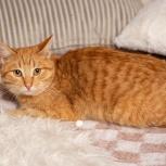 Лелик-рыжий котик, Екатеринбург