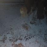 Ищу добрые руки для рыжего котенка, Екатеринбург