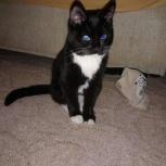 черно-белый котенок в добрые руки 4 месяца, Екатеринбург