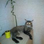 Передержка домашних животных, кошек и собак, Екатеринбург