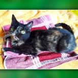 Шладкая Карамелька: кошка 2г., но выглядит как котенок, Екатеринбург