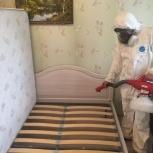 Уничтожение клопов + барьерная защита в подарок!, Екатеринбург