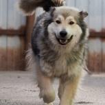 Чудесная Баккарди в поисках дома, собака, Екатеринбург