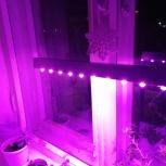 Фитолампа для растений, лампы для рассады, Екатеринбург