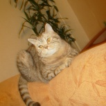 отдам кота, Екатеринбург