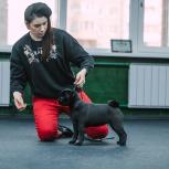 Интеллектулаьная дрессировка и выставочный тренинг для собак, Екатеринбург