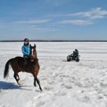 Лошади, конные прогулки, Екатеринбург