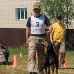 Дрессировка собак в Екатеринбурге., Екатеринбург