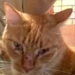 Потерялся рыжий кот Фурманова, 48, Екатеринбург