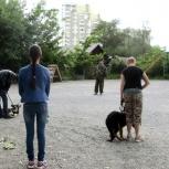 Дрессировка собак любой породы., Екатеринбург