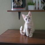 Домашняя гостиница для кошек, Екатеринбург