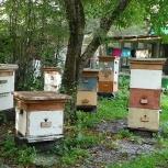Продам пчел, Екатеринбург