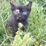 очаровательный котенок, Екатеринбург