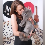 Стрижка собак и кошек, Екатеринбург