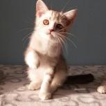 Мальчик котенок Зефир, Екатеринбург