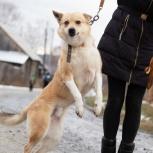 Пёс Роки в добрые руки!, Екатеринбург